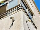 España propiedades económicas studio 24